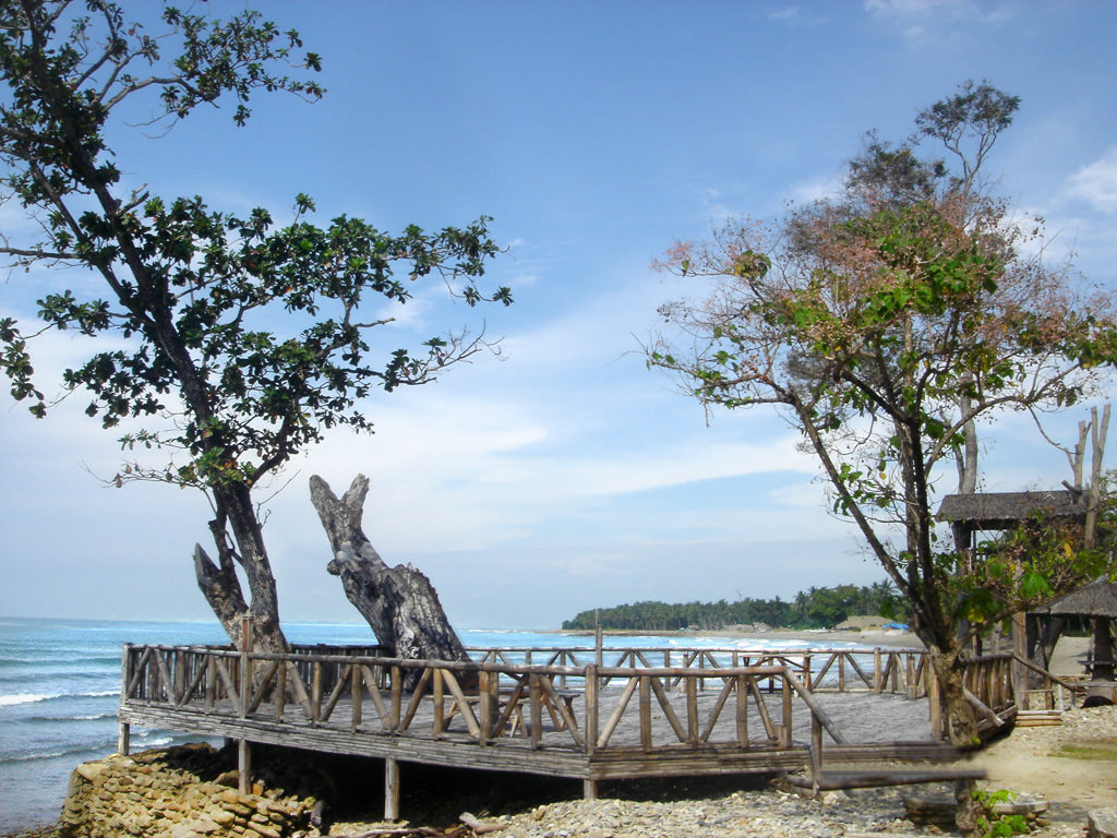 Photo of deck with gnarled tree protruding from one end toward the ocean, beach in background