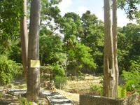 Photo of two trees beside garden paths at Puerto Beach Resort